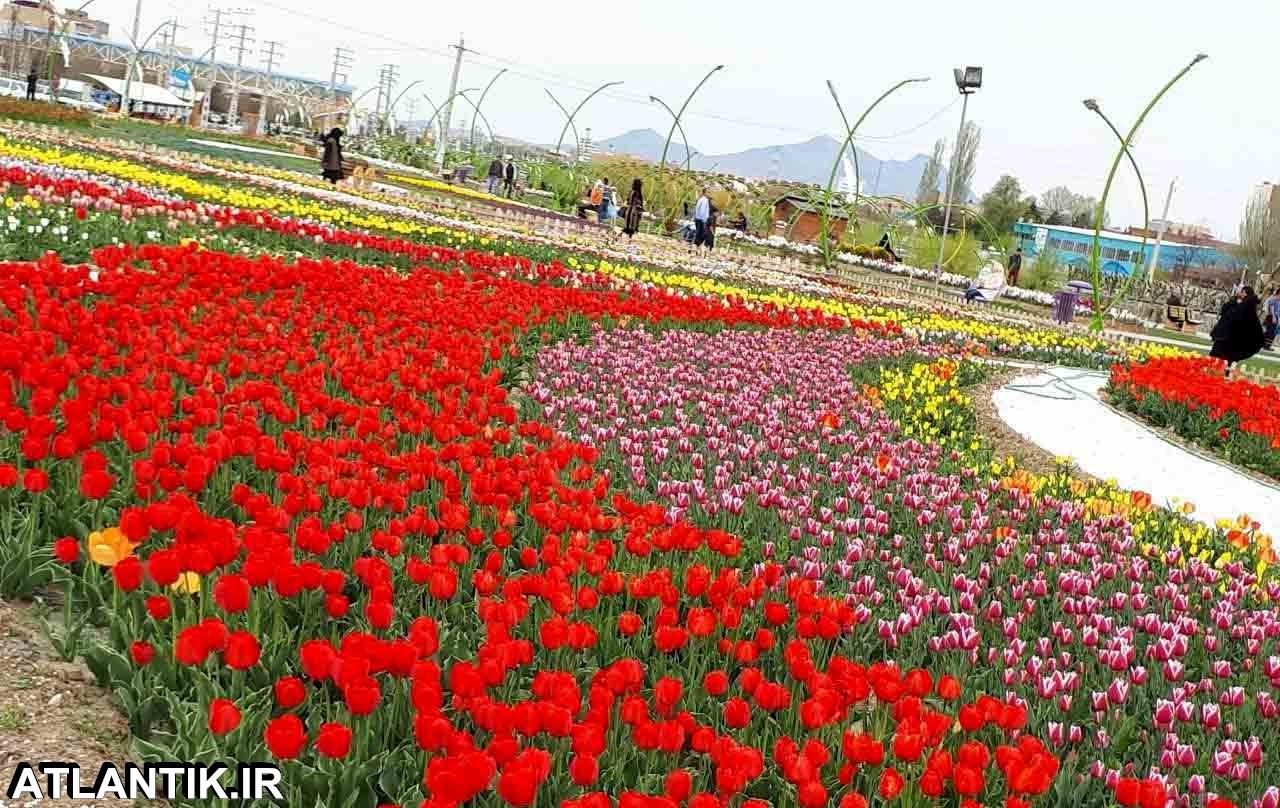ارومیه شهر لاله