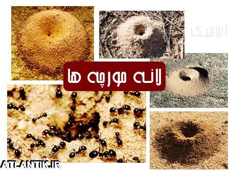 آموزش جهت یابی با لانه مورچه ها