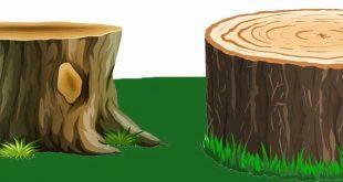 تعیین عمر درختان و پیدا کردن جهت شمال و جنوب با استفاده از تنه درختان