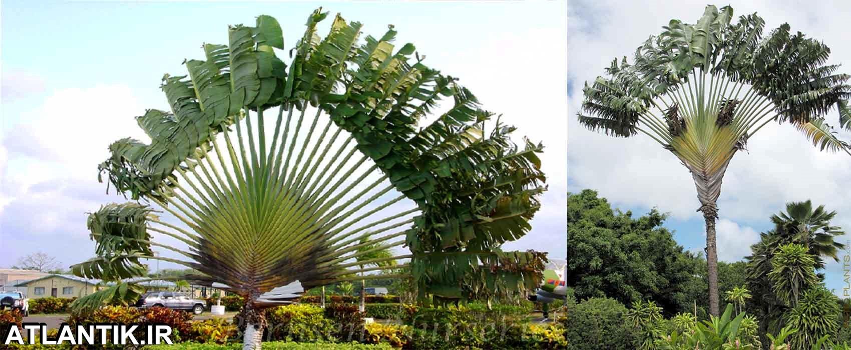 جهت یابی و الگوی رشد گیاهان، سایت آموزشی آتلانتیک